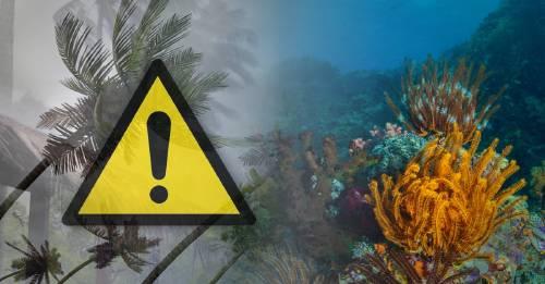 Las tormentas tropicales pueden derribar islas de arrecifes de coral
