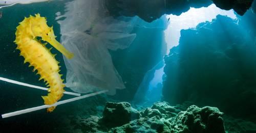 El fondo del mar está cambiando de color