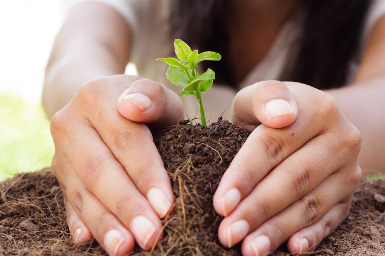 manos planta brote
