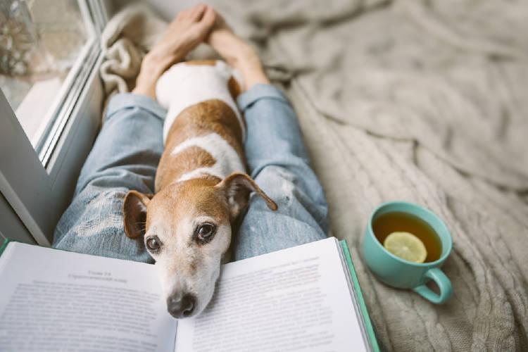 perro te leer