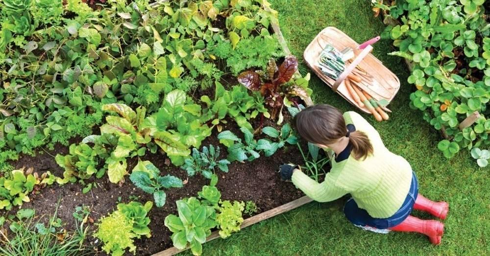 Qué se puede sembrar en Marzo en ambos hemisferios