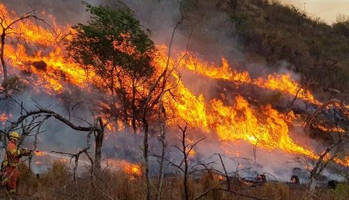 Incendios forestales en América Latina: ¿cuáles son sus causas?