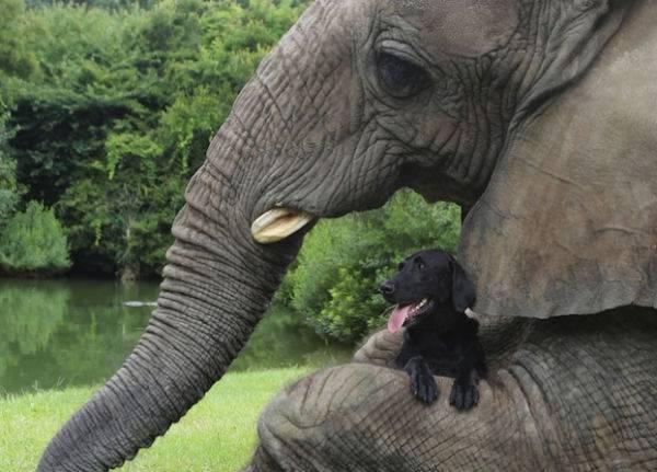 La insólita amistad entre un elefante y un perro