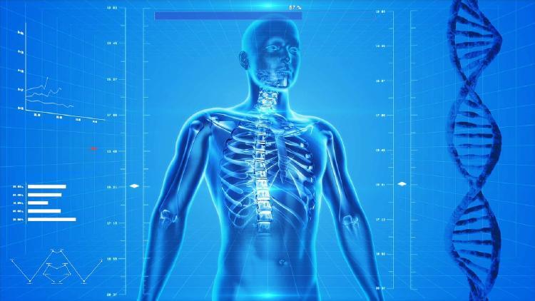 datos curiosos-cuerpo humano