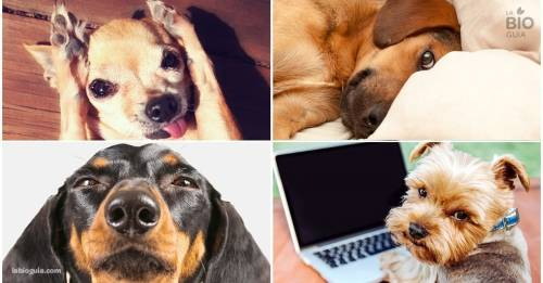 Las mascotas también mienten y te contamos por qué