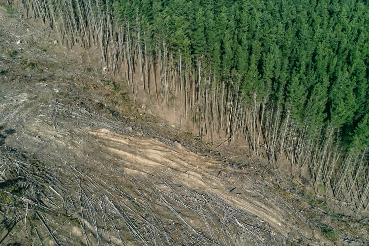 eutrofización-deforestación-unsplash