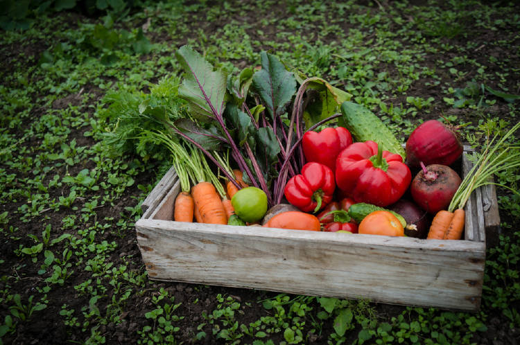 cajon verduras agricultura