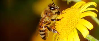 La importancia de las abejas