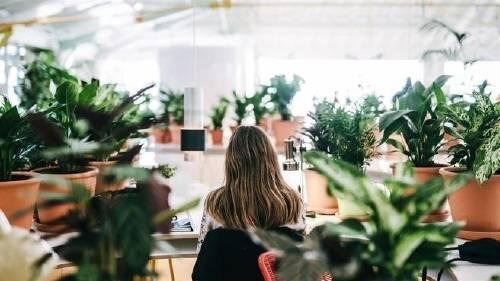 Estas oficinas tienen más plantas que empleados por una razón