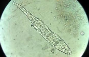 Un animal microscópico volvió a la vida tras pasar 24.000 años bajo el hielo