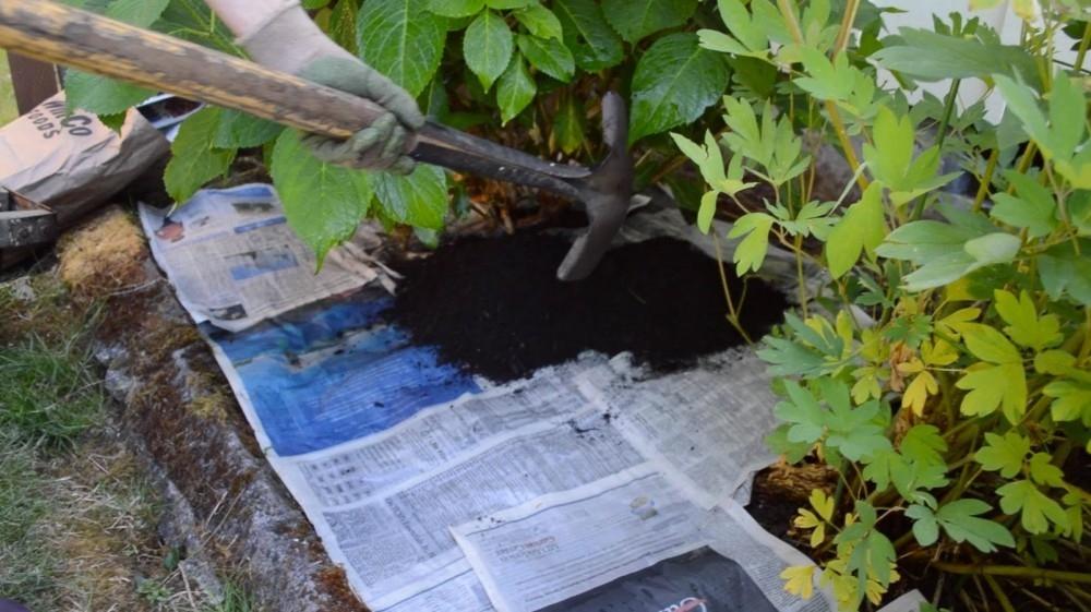 C mo eliminar las hierbas no deseadas de tu jard n sin for Bioguia jardines