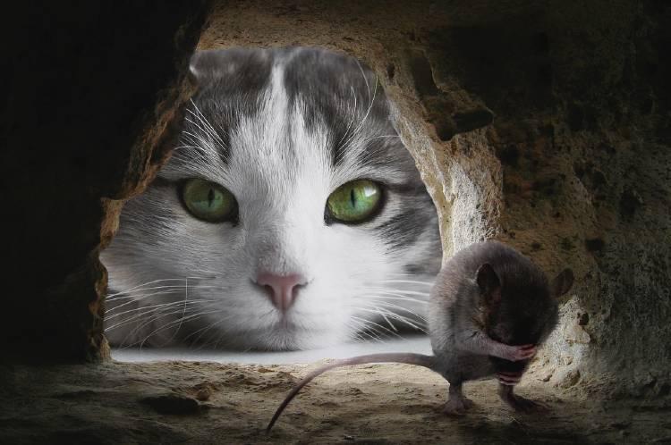 Un gato mira a un ratón asustado