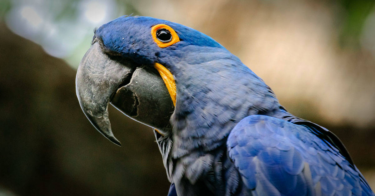 Estos animales de América Latina se extinguieron en los últimos años