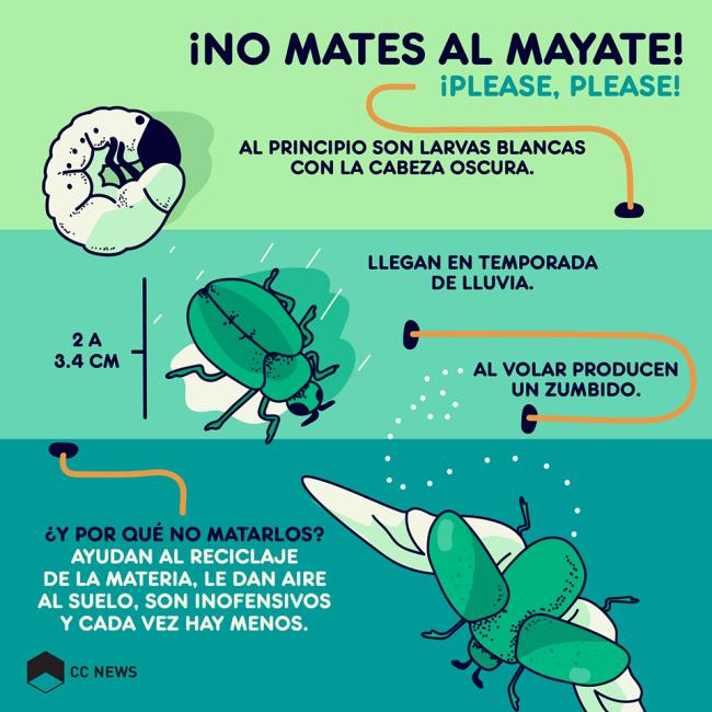 Mayate