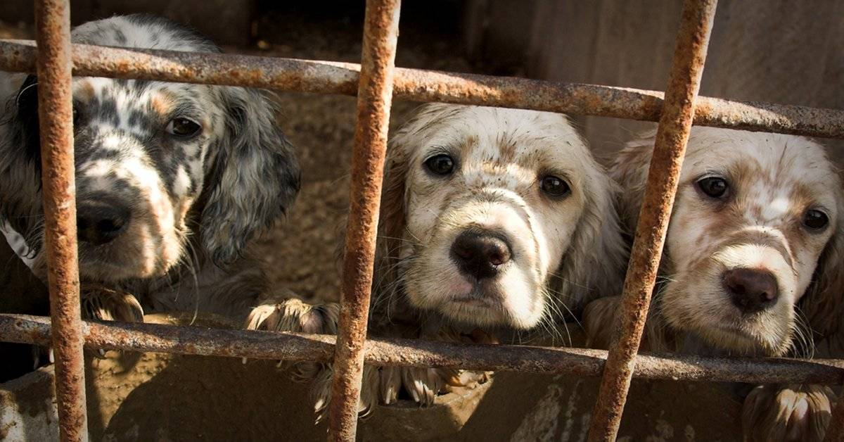 "California pone fin a las ""fábricas de cachorritos"""