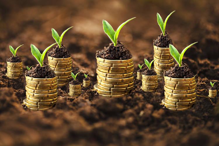 monedas plantas