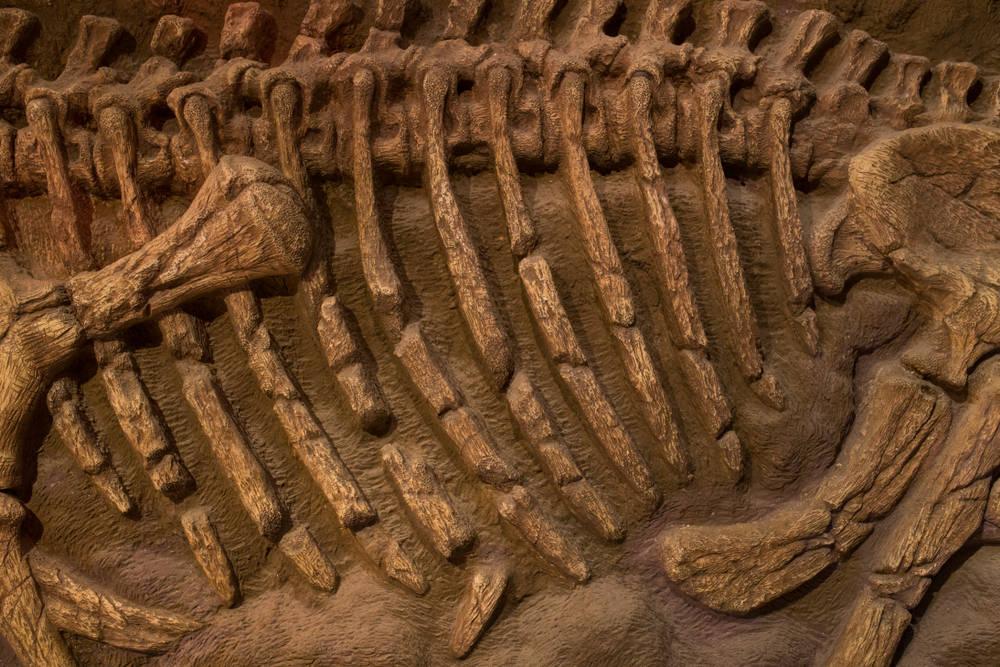 Descubrieron dos nuevas especies de dinosaurios en Argentina