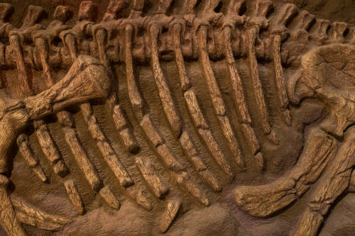 Dragón bailarín: el dinosaurio emplumado que hallaron en China