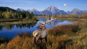 Parque nacional, con luna montañas y ciervo