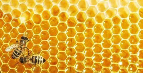 Descubren proteínas en la miel de abejas que son más potentes que los antibi..