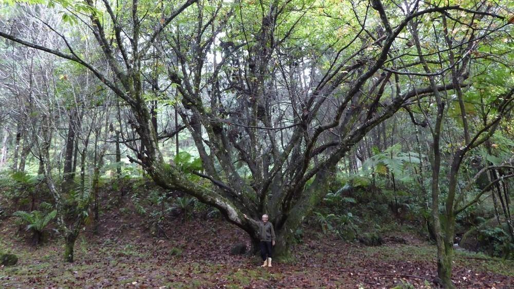 Empezó a plantar, uno por uno, cada uno de los árboles que hoy forman este bosque lluvioso tropical de cerca de 50.000 árboles