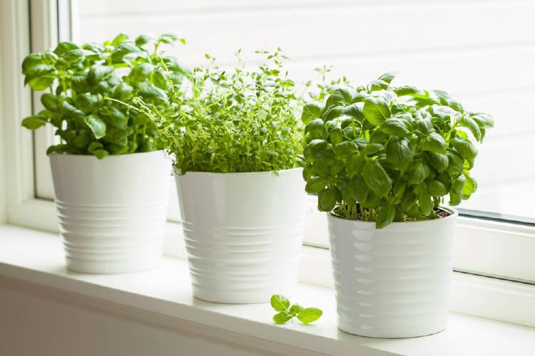 Plantas aromáticas al lado de una ventana