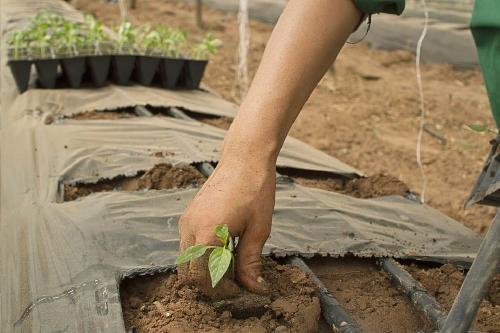 ¿Qué es la agricultura?: Impacto, ejemplos y tipos