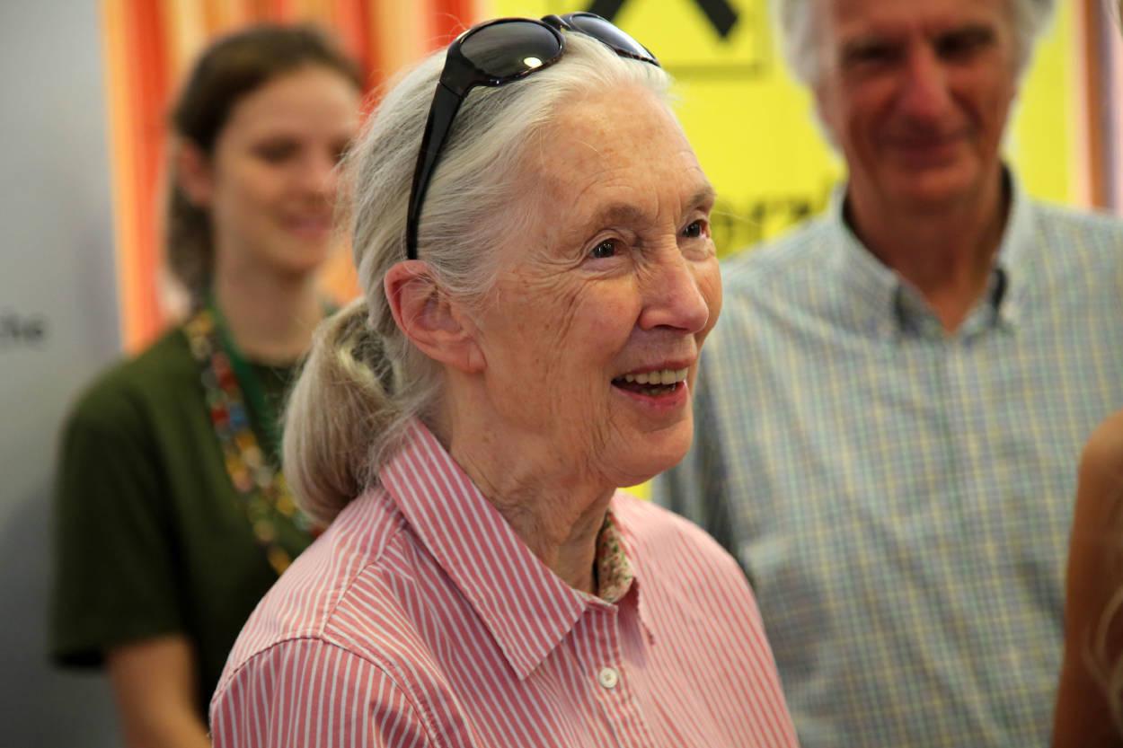 """Jane Goodall: """"Estamos olvidando que somos parte del mundo natural"""""""