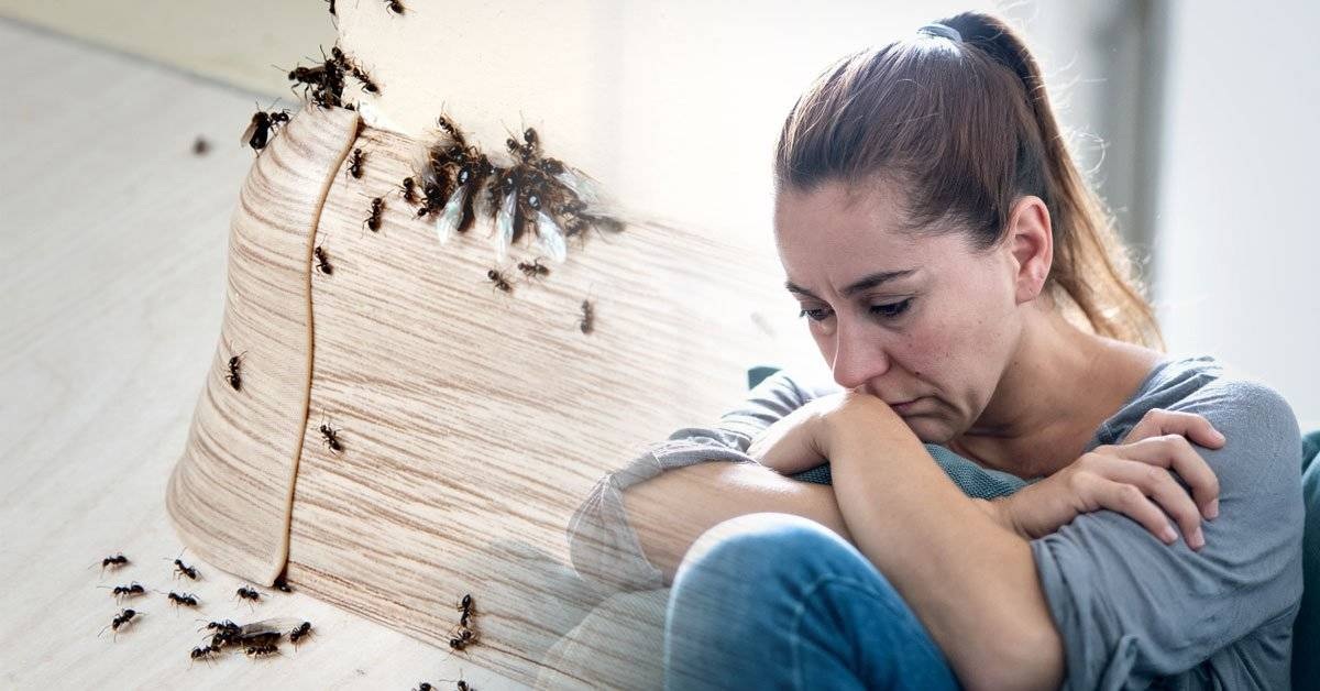 Qué significa a nivel energético tener una plaga en el hogar