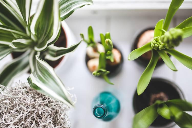 Plantas en macetas vistas desde arriba