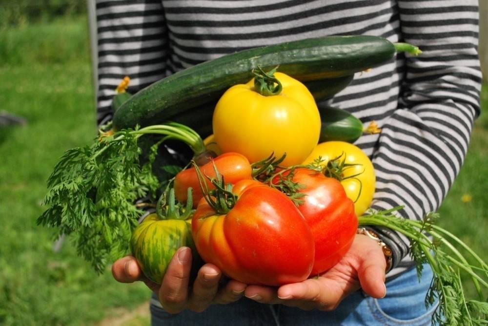 Convertir un pequeño jardín en huerta urbana y producir 250 kilos de comida ..