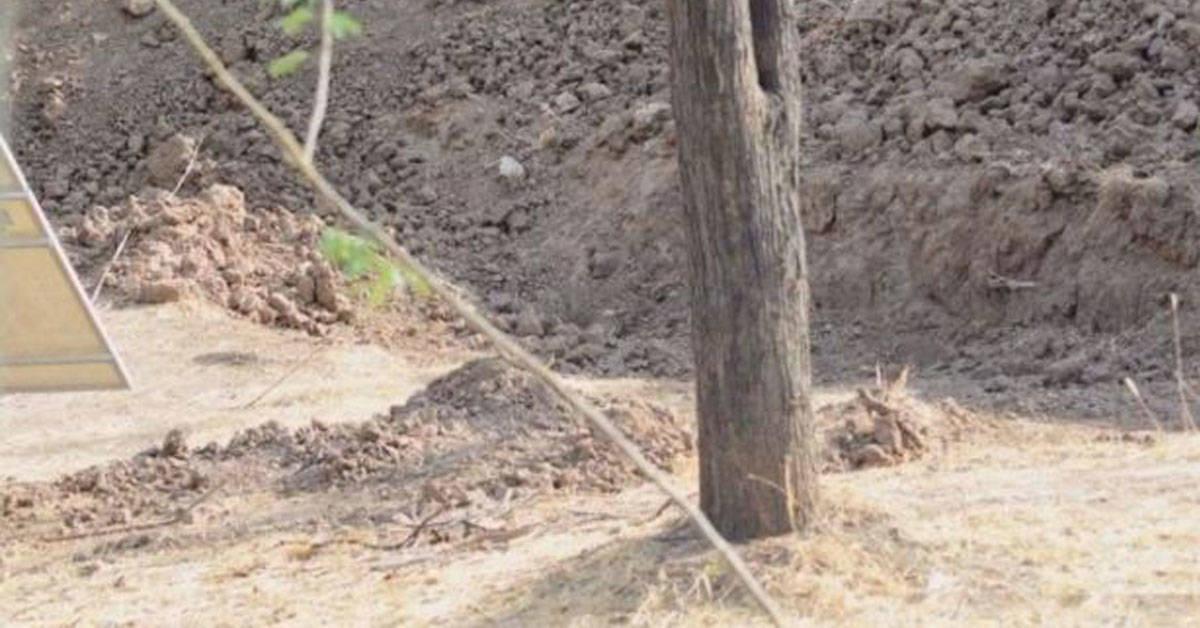 Desafío viral: ¿puedes encontrar al leopardo?