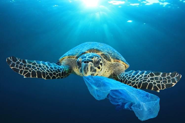 tortuga comiendo una bolsa de plastico