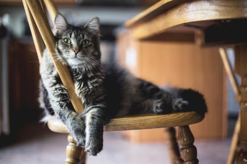 8 curiosidades de los gatos que seguramente  no conocías