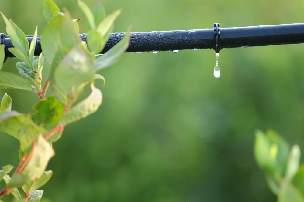 Cómo hacer un sistema de riego por goteo casero