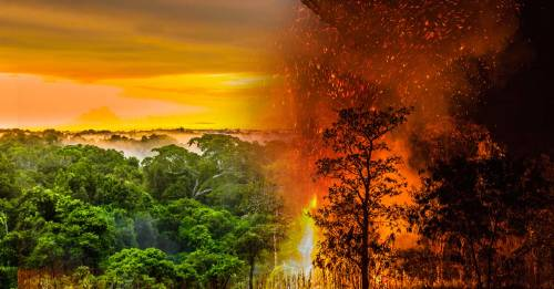 Arde el pulmón del mundo: las consecuencias de la destrucción de la Amazonia