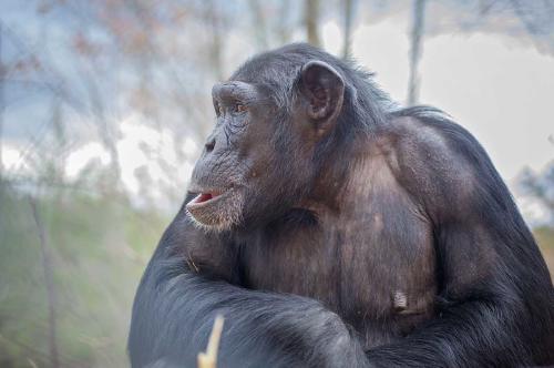 Conoce las curiosas maneras en las que los animales silvestres se curan a sí mismos