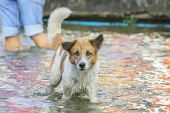 perro en inundación