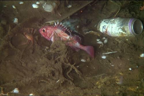El fondo del mar: el vertedero más profundo del mundo