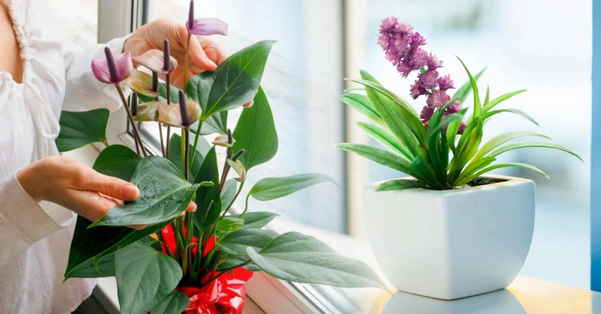 5 plantas de interior que dan flores todo el año
