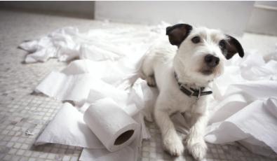 ¿Por qué tu perro te sigue al baño? El significado de este y otros gestos q..