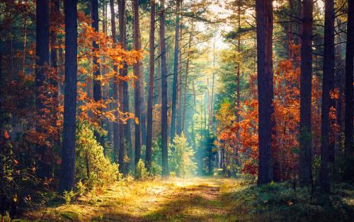 ¿Sabes por qué los bosques son tan importantes?