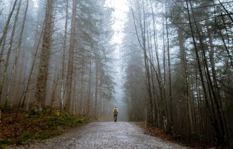 Una persona siguiendo un camino en medio de un bosque