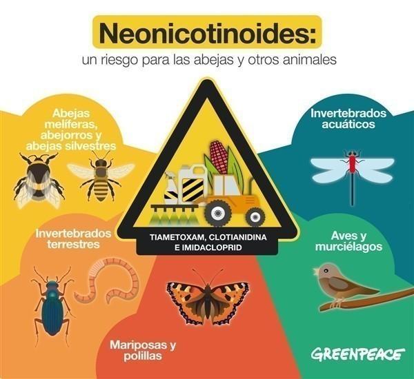 Los neonicotinoides  causan la muerte de enjambres enteros