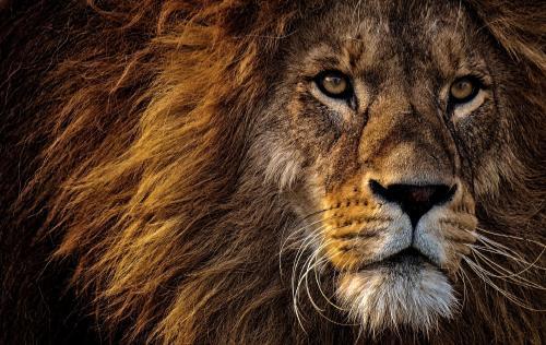 La sexta oleada de extinción de especies animales está en marcha