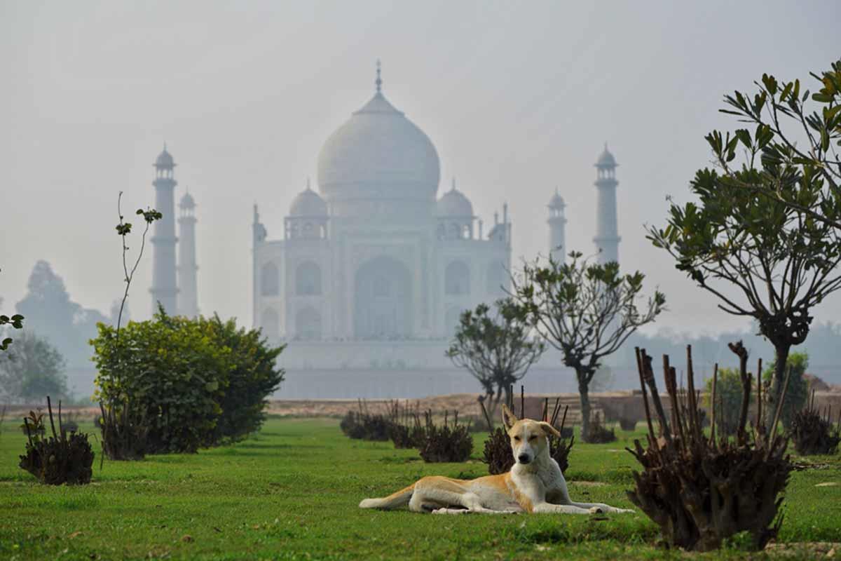 Este estado en India invertirá más de 80 mil dólares para alimentar a perros cal
