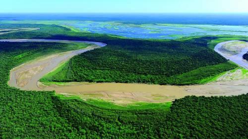 Se deforestaron más de 80.000 hectáreas del norte argentino en 2019