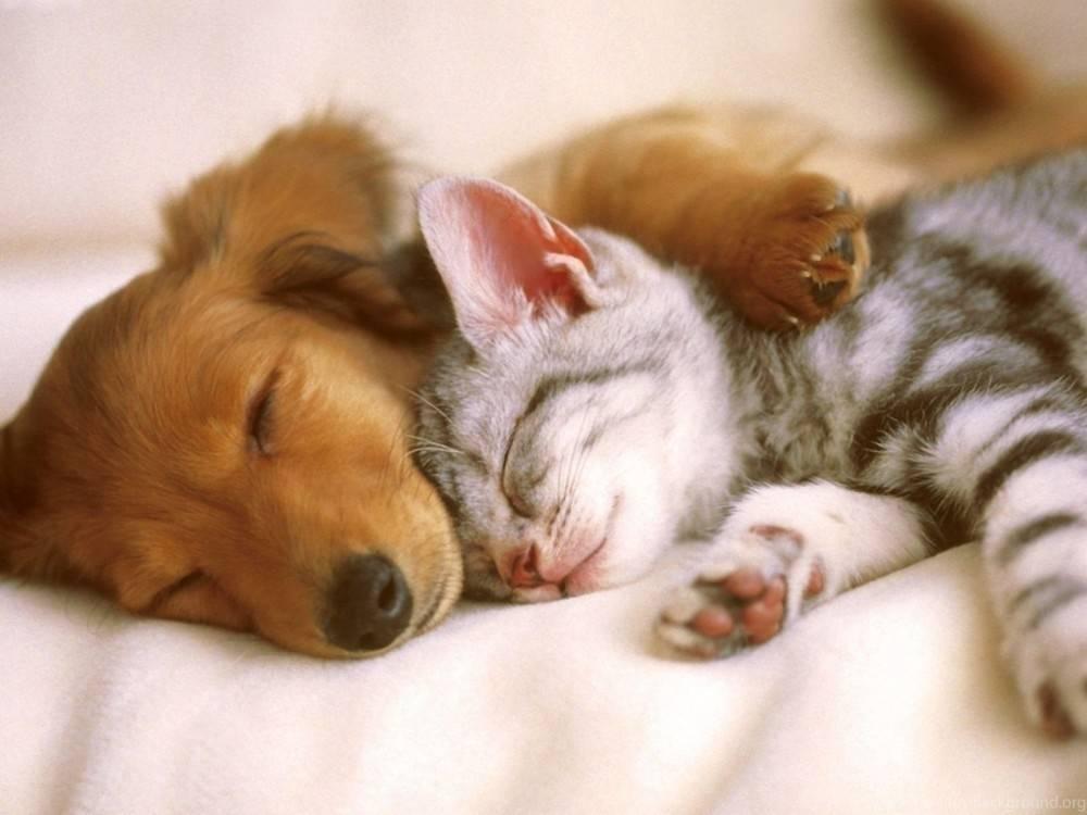 TEST: Según tu personalidad, ¿serías un perro o un gato?