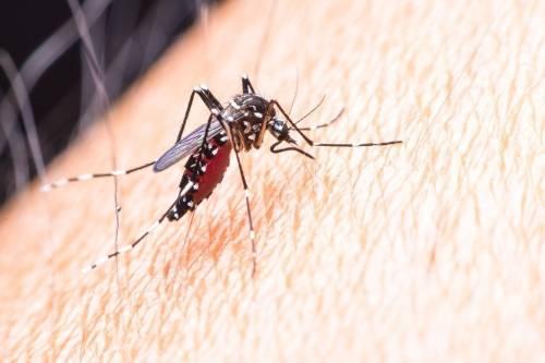 El zika un año después: cómo prevenirlo y evitar sus consecuencias