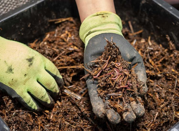 bocashi compost